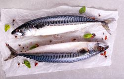 Raw mackerel fish with spices. On table Royalty Free Stock Photography