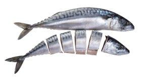 Raw mackerel fish. On white isolated background Royalty Free Stock Photo