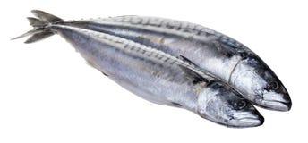 Raw mackerel fish. On white isolated background Stock Photo