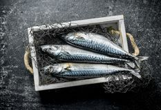 Raw mackerel with fishing net on tray. On dark rustic background stock photography