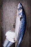 Raw mackerel Royalty Free Stock Image