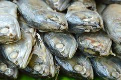 Raw mackerel on fresh banana leaf in market. Raw mackerel on fresh banana leaf in the market Royalty Free Stock Images