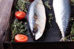 Raw mackerel on old black metallic oven tray. Raw mackerel with thyme and tomato on old  black metallic oven tray Royalty Free Stock Photos