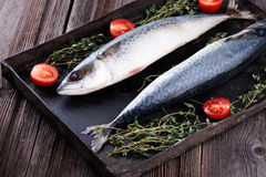 Raw mackerel on old black metallic oven tray. Raw mackerel with thyme and tomato on old  black metallic oven tray Royalty Free Stock Images