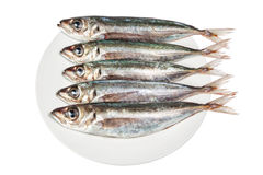 Raw mackerel on a plate. Stock Photos