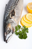 Raw mackerel on white Royalty Free Stock Image