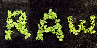 RAW made of growing lettuce Royalty Free Stock Photo