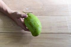 Raw mango on my hand. Stock Photography