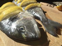 Raw marinated gilt-head bream. Over cutting board before cooking Stock Image