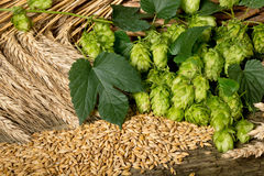 Raw material for beer production Stock Image
