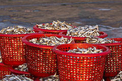 Raw material fish in baskets. At the pier Stock Photo