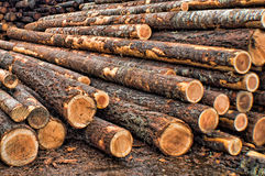 Raw Materials. Second growth timber in a log yard Stock Images