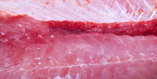 raw meat salmon Royalty Free Stock Photography
