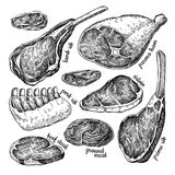 Raw meat set vector drawing. Hand drawn beef steak, pork ham, lamb rib, minced chicken forcemeat. Raw food ingredient. Vintage sketch. Butcher shop product royalty free illustration