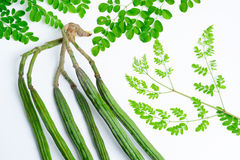 Raw moringa green color Stock Image