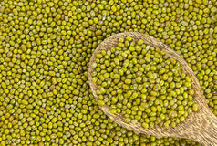 Raw mung  bean Royalty Free Stock Photography