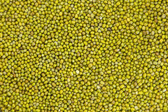 Raw mung  bean Royalty Free Stock Photo
