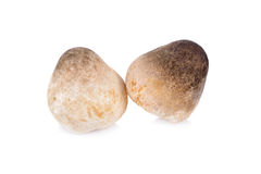 Raw mushroom on white background. Raw mushroom on a white background Royalty Free Stock Images