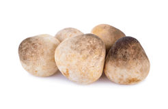 Raw mushroom on white background. Raw mushroom on a white background Royalty Free Stock Photos