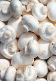 Raw mushrooms background. Raw mushrooms for a background Royalty Free Stock Images
