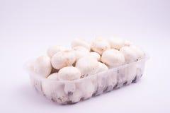 Raw mushrooms champignon Stock Image