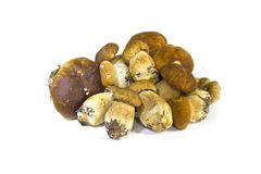 Raw mushrooms collection. Cep on white stock photography