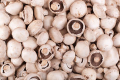Raw mushrooms Stock Images