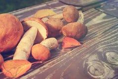 Raw mushrooms Royalty Free Stock Images