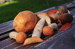 Raw mushrooms Stock Images