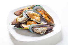Raw mussel. On plate, studio shot Stock Images