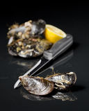 Raw mussel food Royalty Free Stock Image