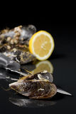 Raw mussel food Stock Photography