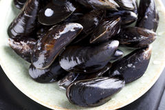 Raw Mussels. Fresh raw mussels in a bowl from directly above Royalty Free Stock Photo