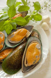 Raw Mussels with Fresh Basil Leaves Royalty Free Stock Photography