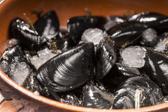 Raw mussels Royalty Free Stock Image