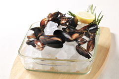 Raw mussels on ice. Raw mussels and lemon on ice Stock Images