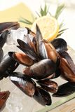 Raw mussels on ice. Detail of raw mussels on ice cubes Stock Photography