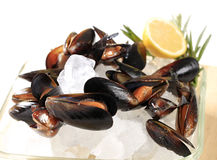 Raw mussels on ice. Raw mussels and lemon on ice Stock Photos