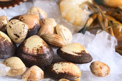 Raw Mussels on Ice. Raw mussels and other seafood such as shrimps and prawns on ice (Selective Focus, Focus on the big mussel in the left bottom corner Royalty Free Stock Images