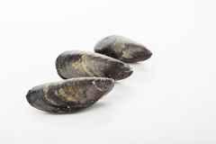 Raw mussels isolated over white. Tasty raw mussels isolated over white Royalty Free Stock Photo