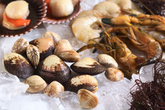 Raw Mussels with Other Seafood on Ice. Raw mussels and other seafood such as shrimps, prawns and scallops on ice (Selective Focus, Focus on the three big mussels Royalty Free Stock Image