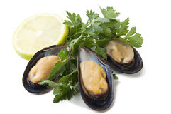 Raw mussels with parsley and lemon Royalty Free Stock Photography