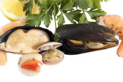 Raw mussels with parsley and lemon Stock Photos