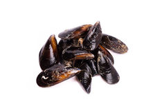 Raw mussels. Seafood in whiite background Stock Photography