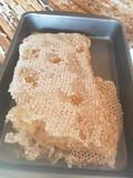 Raw natural honeycomb from bee hive royalty free stock photos