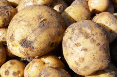 Raw new potatoes Stock Photography