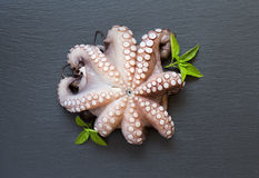 Raw octopus with basil Stock Image