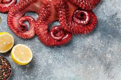 Raw octopus cooking stock photo