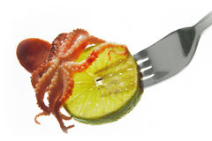 Raw octopus on fork Royalty Free Stock Photo