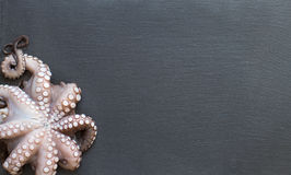 Raw octopus. Fresh raw octopus over dark grey background closeup Stock Photography